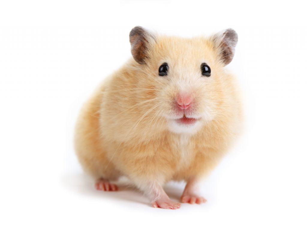 Even blogs about a pet hamster need regular WordPress maintenance.